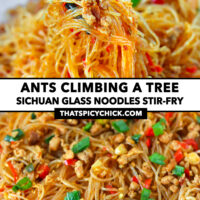 """Chopsticks holding up noodles and pork and close-up of stir-fried pork noodles. Text overlay """"Ants Climbing A Tree"""", """"Sichuan Glass Noodles Stir-fry"""", and """"thatspicychick.com""""."""