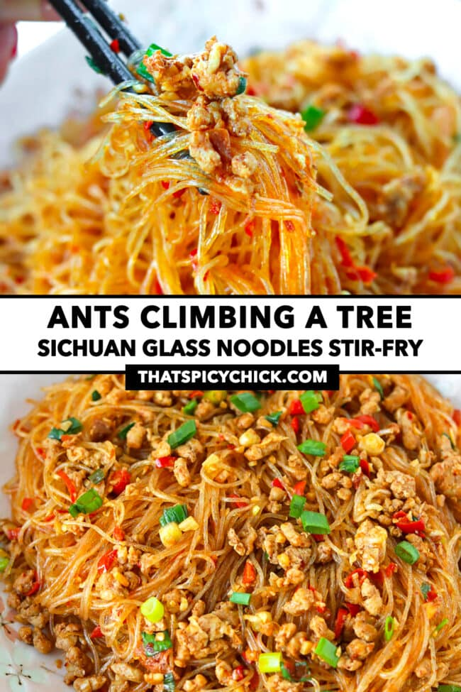 """Chopsticks holding up noodles and pork and front view of stir-fried pork noodles on a plate. Text overlay """"Ants Climbing A Tree"""", """"Sichuan Glass Noodles Stir-fry"""", and """"thatspicychick.com""""."""