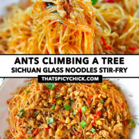 """Chopsticks holding up noodles and pork, and top view of stir-fried pork noodles on a plate. Text overlay """"Ants Climbing A Tree"""", """"Sichuan Glass Noodles Stir-fry"""", and """"thatspicychick.com""""."""