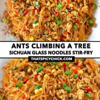 """Top and front view of stir-fried vermicelli and pork on a plate. Text overlay """"Ants Climbing A Tree"""", """"Sichuan Glass Noodles Stir-fry"""", and """"thatspicychick.com""""."""